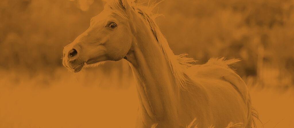 Header_Pferd