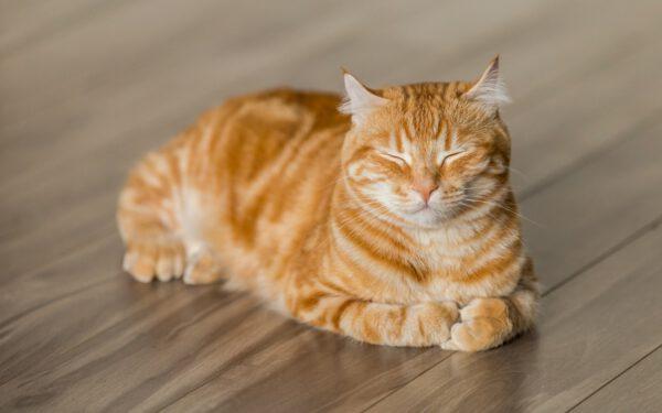 tiernaturgesund_schmerzerkennung hilfsmittel katzen