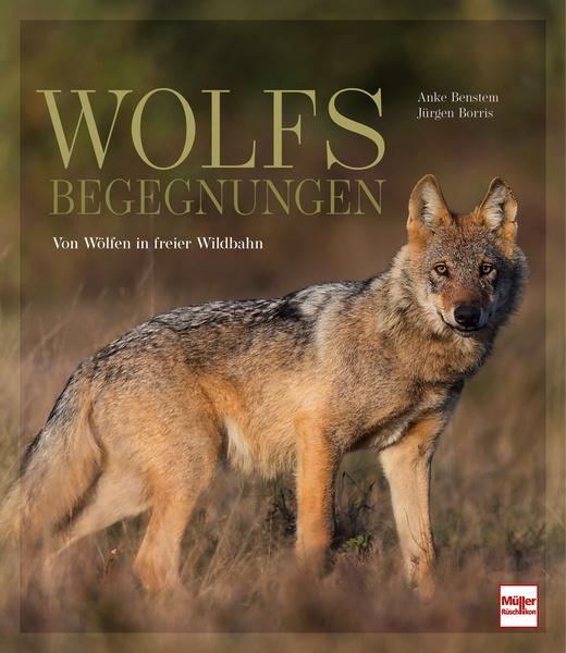 Anke Benstem / Jürgen Borris Wolfsbegegnungen Von Wölfen in freier Wildbahn